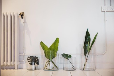 different-plant-leaves-sit-in-glass-jars